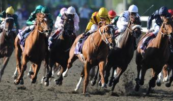 Breeder's Cup: Horse Racing's Superbowl